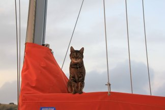 Guard cat on board