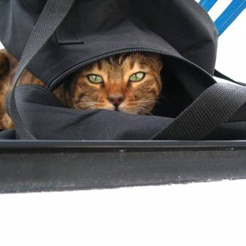 I love bags!