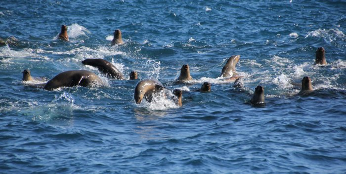 Enthusiastic swimmers