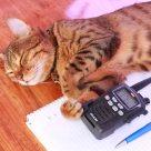Exhausted radio operator