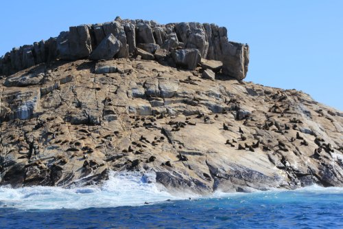 Big Rock and hundreds of seals