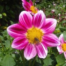 Giverny - Monet's Garden