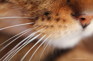 First Macro shot of Bengie's whiskers
