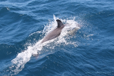 Dolphin showing off!