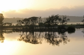 Moruya reflections