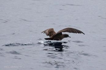 Shearwater takeoff