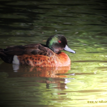 Chestnut-Teal-Lighting-Effect1