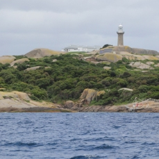 Montague Island Sanctuary