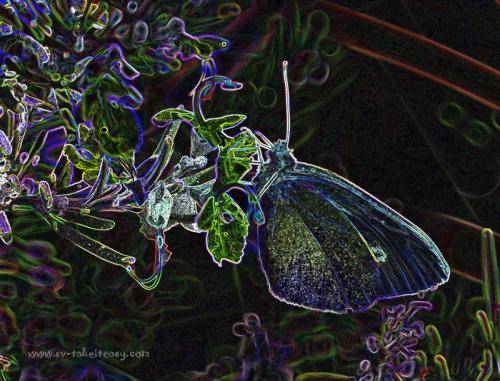 Butterfly - Week 4