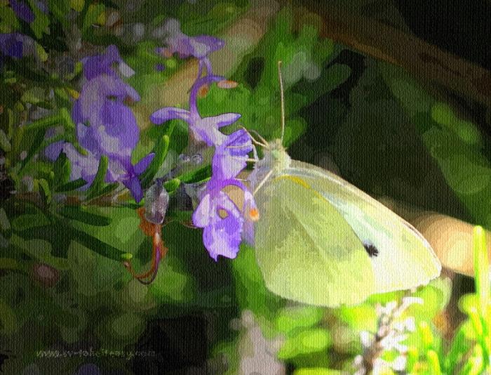Butterfly - Week 2