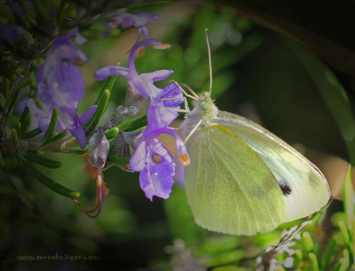 Butterfly - Week 3