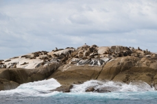 Andersons Islets and their seals
