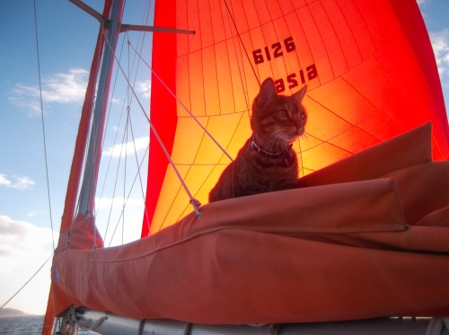 Cat on cat - in the sail bag, full speed under spinnaker - she's got her sea legs!