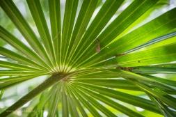 Beautiful palm