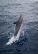 Dolphins put on a show