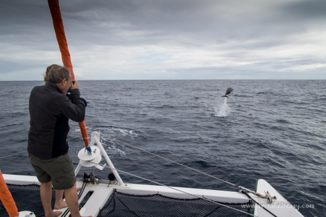 Putting on a show during a passage to Lady Elliott Island