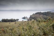 Humpy island -4