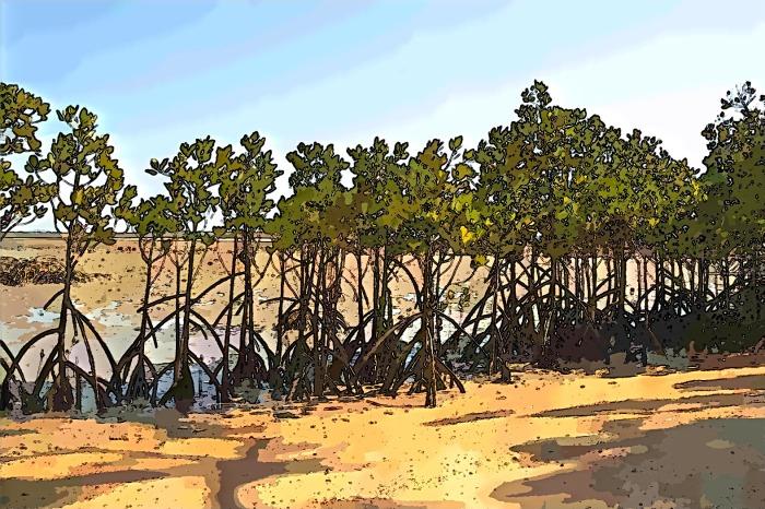 Mangrove - Week 2