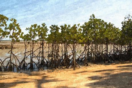 Mangrove - Week Three