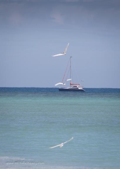 Masthead Island-17