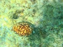 Stunning shell at Humpy Island