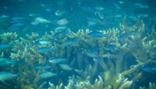 Monkey Bay Snorkeling