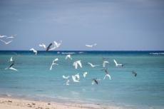 Reef Egret-4