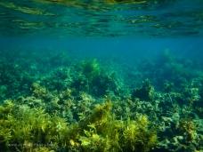 Under our hulls - Humpy Island