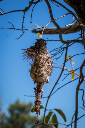 Spindle nest