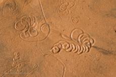 Crustacean patterns in the sand