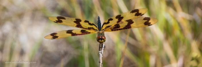 Dragonfly - Week 1