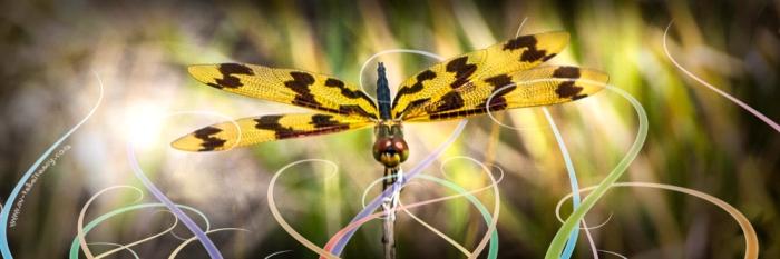 Dragonfly - Week 3