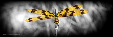 Dragonfly - Week 4