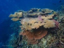 Coral outcrops