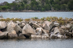 Breakwater wall come Tern rookery