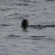 One seal close to the boat