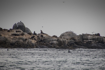 Lots of seals!
