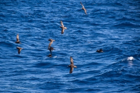 Shearwater fishing