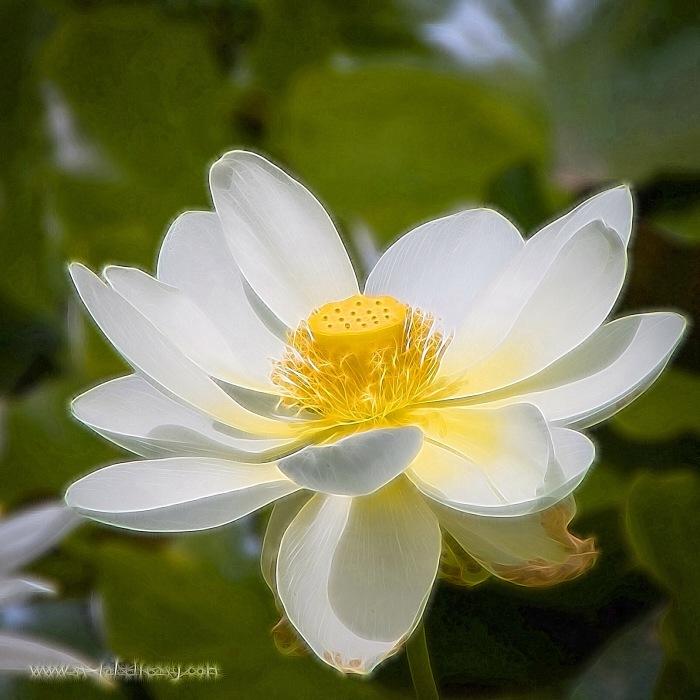 Lotus - Week 3
