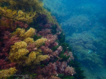Refuge Cove underwater colours