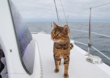 Bengie being a brave shipcat, patrolling the deck underway!