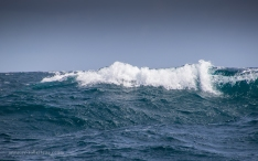 Nice little waves!