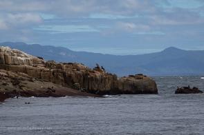 Rag Island, Wilsons Promontory