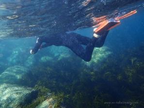 Snorkeling at Little Waterloo Bay