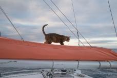 Pussycat patrol