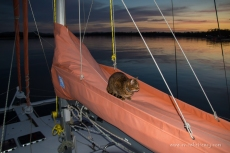 Night patrol and star gazing for the ship's cat!