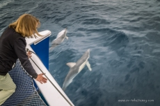 Dolphins at our bows
