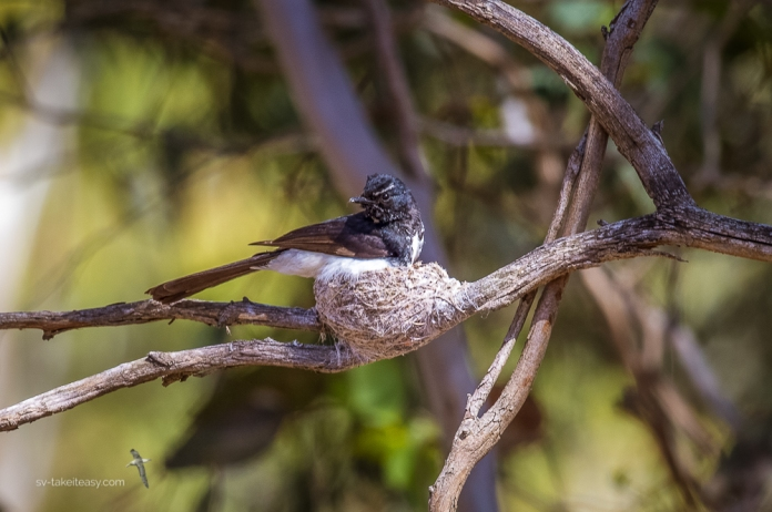 On the nest at Serendip