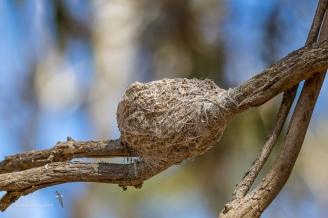 Nest at Serendip
