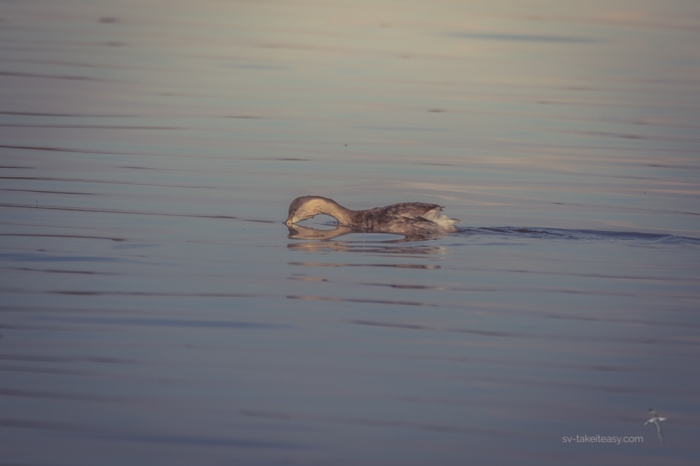 Lake Borrie-2734
